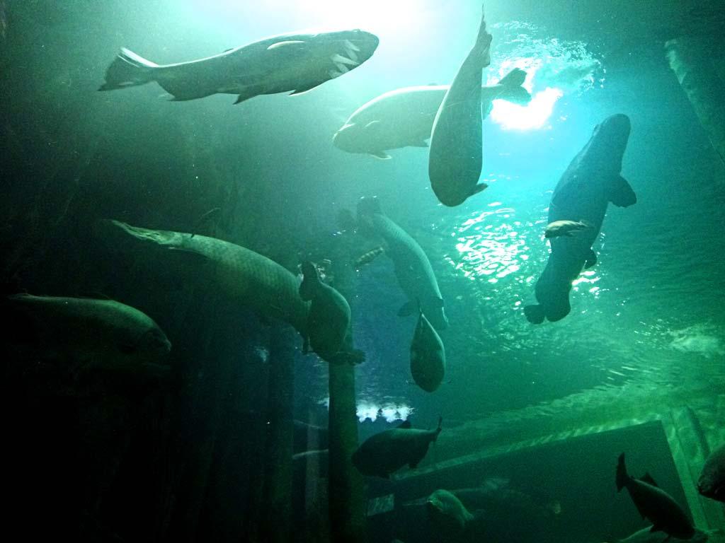 aquaria zaragoza asociación acuariófila barcelona
