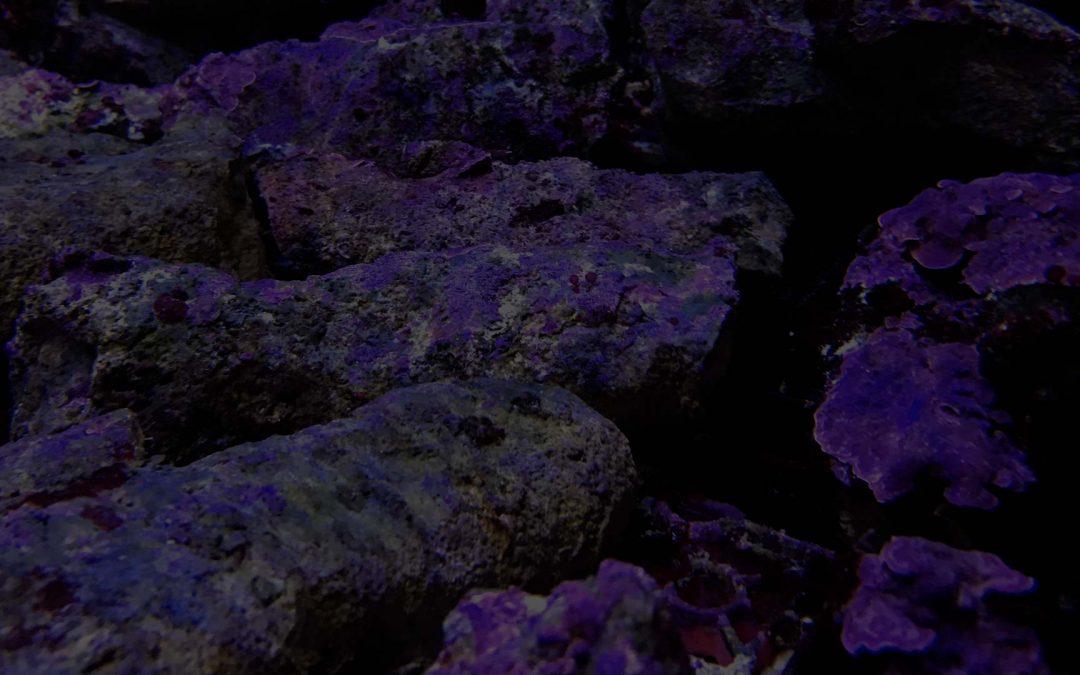 Taller de aquascaping en acuarios marinos