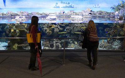Visita guiada al Aquàrium de Barcelona. 2018