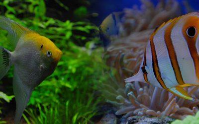 L'aquari de… Alberto Galofré